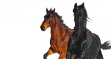 Old Town Road Lil Nas X