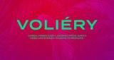 Voliéry Sheen & Jickson feat. Robin Zoot