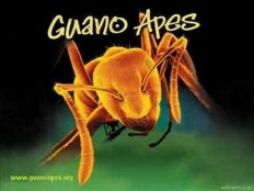 Guano Apes - open your eyes