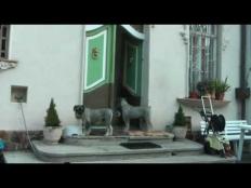 Těžkej Pokondr - Vem ven psisko