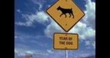 Náruživá Žlutý pes