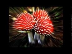 Will Star feat. Gavin Castleton - Better Tomorrow